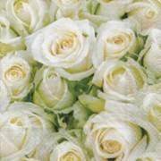 Partytischdecke.de | Servietten 25x25 White roses 20 Stück