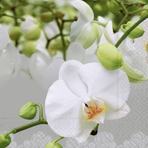 Servietten 33x33 Orchid Festival 20 Stück