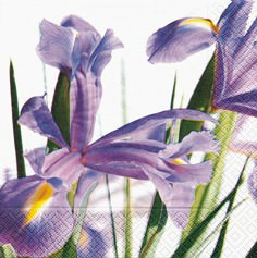 Partytischdecke.de   Servietten 33x33 Blue Iris 20 Stück