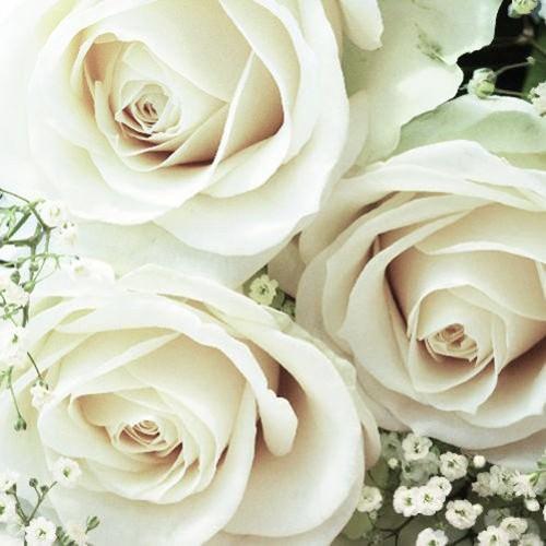 Serviette 33x33 Royal Floral 20 Stück