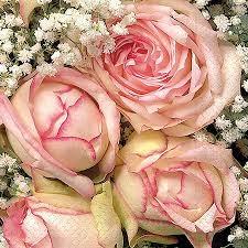 Partytischdecke.de | Servietten 33x33 Royal flower 20 Stück