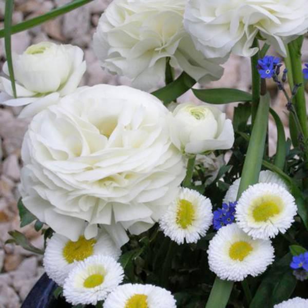 Serviette 33x33 Ranunculus 20 Stück